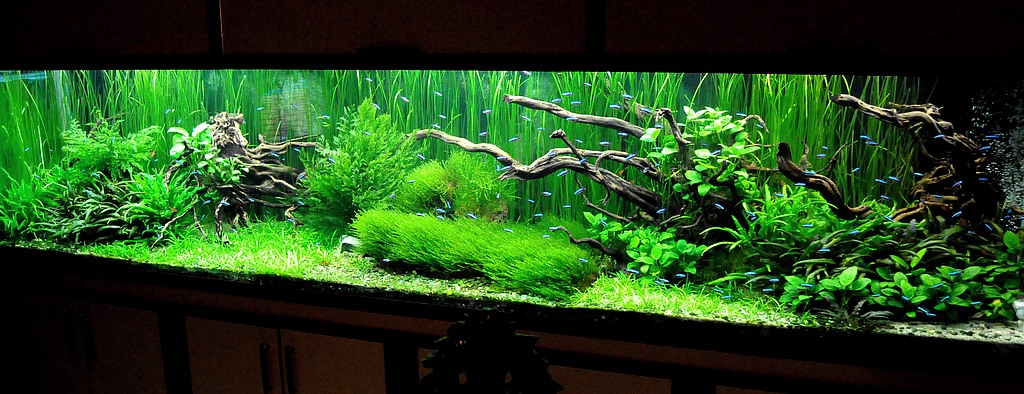1680 liters aquascaping world forum for Racine pour aquarium